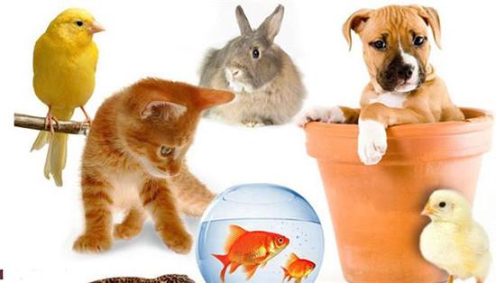 نظر دین اسلام در رابطه با نگهداری حیوانات خانگی